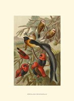 "Weaver Birds by John James Audubon - 10"" x 13"""