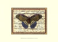 """Butterfly Harmony II by Vision Studio - 13"""" x 10"""""""