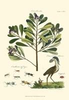Naturalist Study II Framed Print