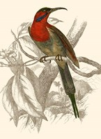Hummingbird VI Fine Art Print