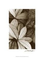 """Garden Textures I by Laura Denardo - 15"""" x 20"""""""