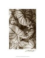 """Garden Textures IV by Laura Denardo - 15"""" x 20"""""""