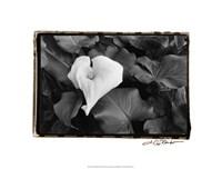 """Floral Elegance III by Laura Denardo - 20"""" x 16"""""""
