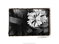 """Floral Elegance IV by Laura Denardo - 20"""" x 16"""""""