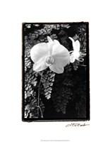 """Striking Orchids I by Laura Denardo - 16"""" x 20"""""""