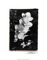 """Striking Orchids II by Laura Denardo - 16"""" x 20"""""""