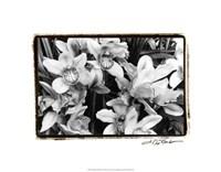 "Striking Orchids III by Laura Denardo - 20"" x 16"""