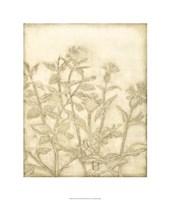 Ivory Field II Framed Print