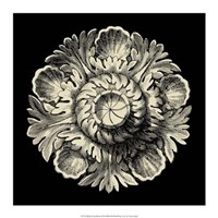 "Black and Tan Rosette III by Vision Studio - 17"" x 17"""