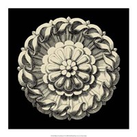 "Black and Tan Rosette IV by Vision Studio - 17"" x 17"""