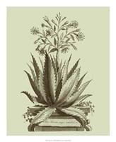 Vintage Aloe I Fine Art Print