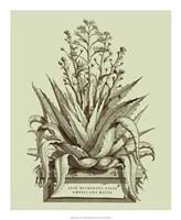 Vintage Aloe IV Fine Art Print