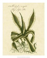 Thornton Exotics III Fine Art Print