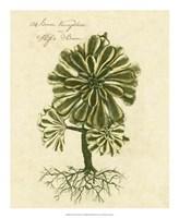 Thornton Exotics IV Fine Art Print