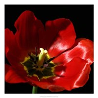 "Shimmering Tulips I by Renee Stramel - 22"" x 22"""