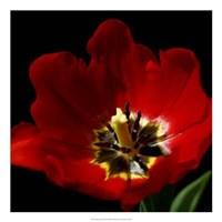 """Shimmering Tulips II by Renee Stramel - 22"""" x 22"""""""