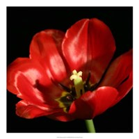"Shimmering Tulips IV by Renee Stramel - 22"" x 22"""