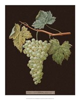 White Grapes Fine Art Print