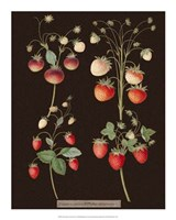 Strawberries Fine Art Print