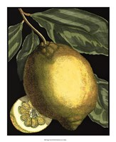 Fragrant Citrus II Framed Print