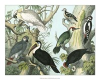 "Avian Collection I by John James Audubon - 20"" x 16"""