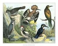 "Avian Collection II by John James Audubon - 20"" x 16"""