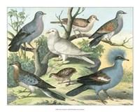 "Avian Collection III by John James Audubon - 20"" x 16"""