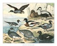 "Avian Collection IV by John James Audubon - 20"" x 16"""