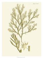 "Dramatic Seaweed I by Vision Studio - 24"" x 32"""