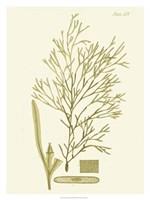 "Dramatic Seaweed II by Vision Studio - 24"" x 32"""