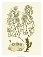"Dramatic Seaweed IV by Vision Studio - 24"" x 32"""