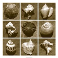 Shell Sampler