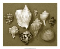 """Shell Collector Series I by Renee Stramel - 22"""" x 18"""""""