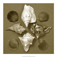 """Shell Collector Series III by Renee Stramel - 18"""" x 18"""""""