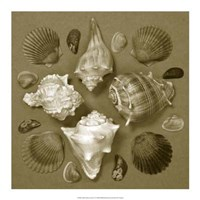 """Shell Collector Series IV by Renee Stramel - 18"""" x 18"""""""