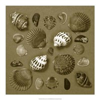 """Shell Collector Series V by Renee Stramel - 18"""" x 18"""""""