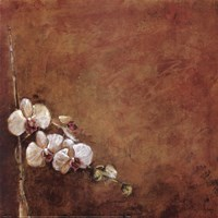 """Orchid Series I (Simplicity I) by Dennis Carney - 19"""" x 19"""""""
