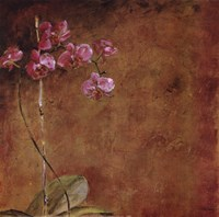 """Orchid Series II (Simplicity II) by Dennis Carney - 19"""" x 19"""""""