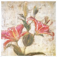 Sorbet Lily II Fine Art Print