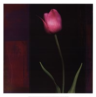 Red Tulip II Fine Art Print