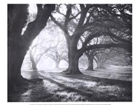 Oak Alley, Light and Shadows Fine Art Print