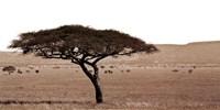 Serengeti Horizons I Fine Art Print