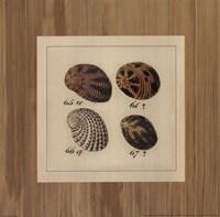 Shells on Rattan I Fine Art Print