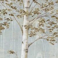 "Birch Study II by Daphne Brissonnet - 20"" x 20"""