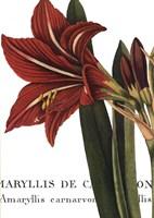 Botanique I Framed Print