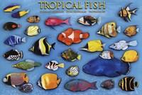 "Tropical Fish by John James Audubon - 36"" x 24"""