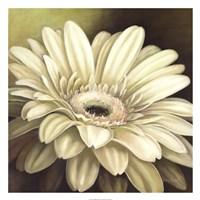 "Daisy Portrait by Lisa Audit - 26"" x 26"""