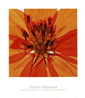 "Pressed Flower Abstract #1 by Shams Rasheed - 20"" x 23"""