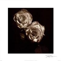 "Circus Roses by Michael Harrison - 16"" x 16"""