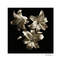 "Three Lilies by Michael Harrison - 16"" x 16"""